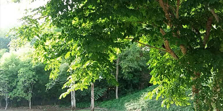 16-Lakewood-Hills-(7)